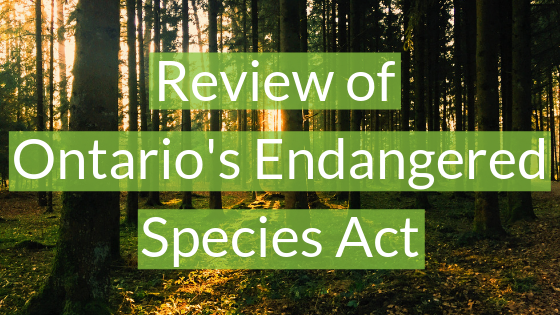 Review of Ontario's Endangered Species Act